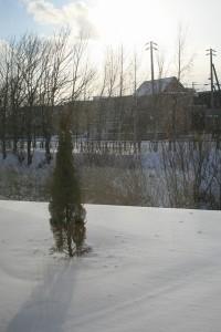 雪の中のシンボルツリー