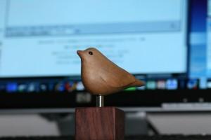 手のひらサイズの鳥