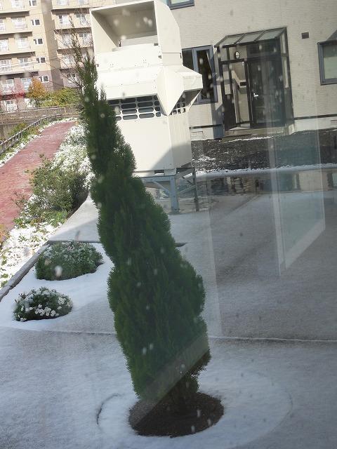 風で傾いたシンボルツリー