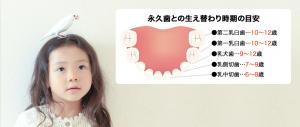 乳歯から永久歯へ 歯の生えかわり そのフシギと対策
